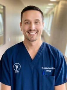 Dr Antoine Dunié-Mérigot - Service de chirurgie vétérinaire