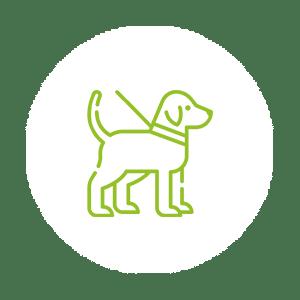 Consultations chien - CHV - MONTPELLIER