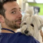 CHV Languedocia Centre hospitalier vétérinaire montpellier