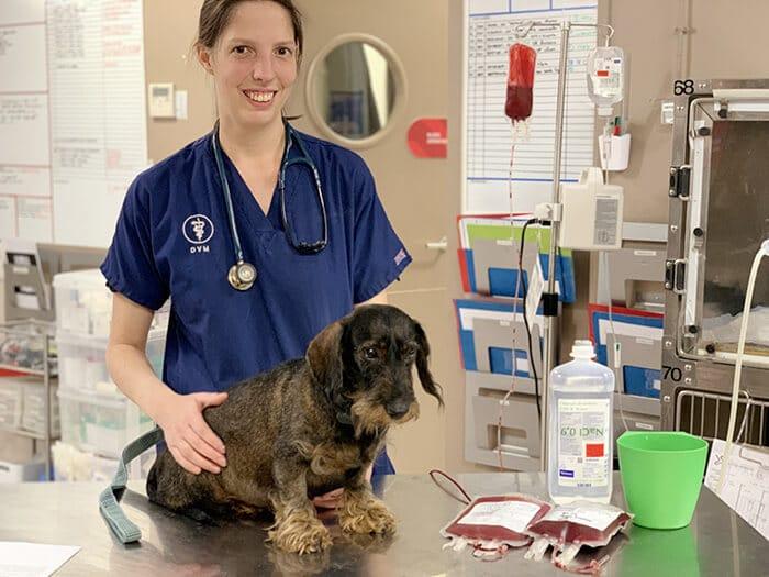 Consultation vétérinaire Montpellier