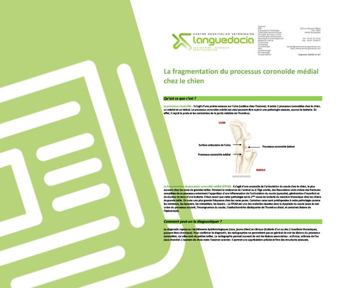 fragmentation du processus coronide medial Languedocia Chien Chat Vétérinaire