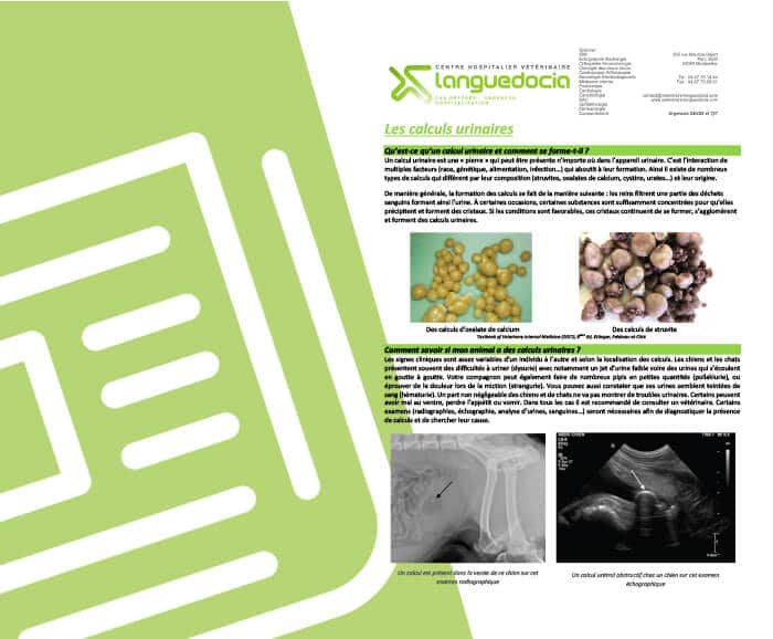 Languedocia fiche conseil calcul urinaire