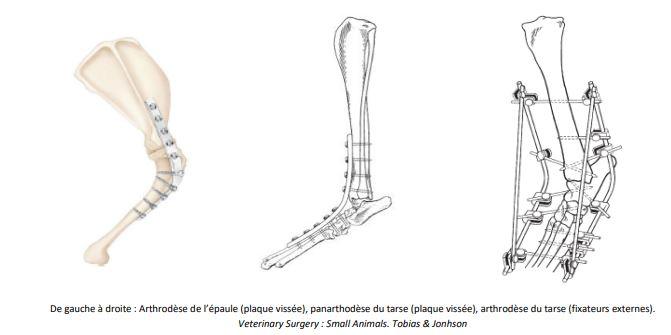 De gauche à droite : Arthrodèse de l'épaule (plaque vissée), panarthodèse du tarse (plaque vissée), arthrodèse du tarse (fixateurs externes). Veterinary Surgery : Small Animals. Tobias & Jonhson