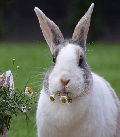 arret transit chez le lapin